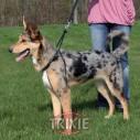 Trixie Arnés entrenamiento Easy Walk Basic S,27-36cm,20mm