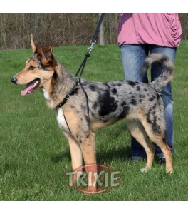 Trixie Arnés entrenamiento Easy Walk Basic M:33-47cm,25mm